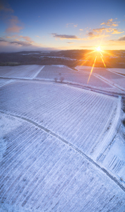 新雪の椀子ヴィンヤードと朝日と浅間山遠望の写真素材 [FYI04767078]