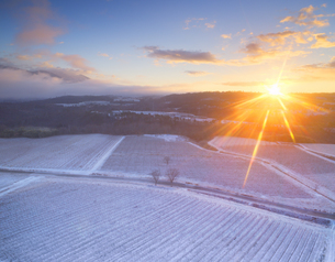 新雪の椀子ヴィンヤードと朝日と浅間山遠望の写真素材 [FYI04767079]