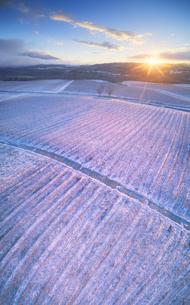 新雪の椀子ヴィンヤードと朝日と浅間山遠望の写真素材 [FYI04767080]