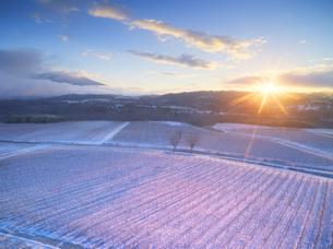 新雪の椀子ヴィンヤードと朝日と浅間山遠望の写真素材 [FYI04767081]
