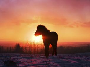 朝日と馬の写真素材 [FYI04767476]