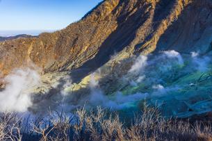 大涌谷の噴煙と噴煙によって枯れた木の写真素材 [FYI04767503]