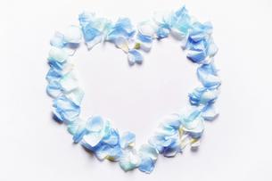 造花の青い花と花びらで模ったハートのフレーム。白いコピースペース。平置きの俯瞰撮影。白バック。の写真素材 [FYI04767724]