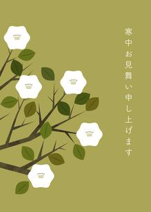 白い花 寒中見舞い イラストのイラスト素材 [FYI04767817]