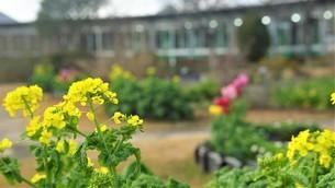 冬に春色の花壇。の写真素材 [FYI04768078]
