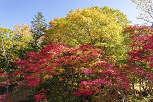 北海道 層雲峡の紅葉の写真素材 [FYI04768117]