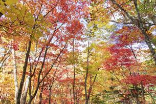 北海道 層雲峡の紅葉の写真素材 [FYI04768120]