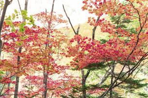 北海道 層雲峡の紅葉の写真素材 [FYI04768121]