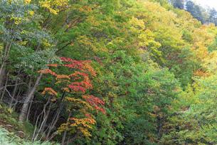 北海道 層雲峡の紅葉の写真素材 [FYI04768124]