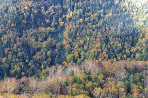 北海道 層雲峡の紅葉の写真素材 [FYI04768127]