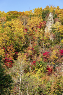 北海道 層雲峡の紅葉の写真素材 [FYI04768140]