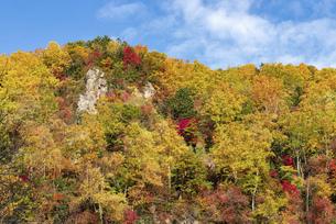 北海道 層雲峡の紅葉の写真素材 [FYI04768141]