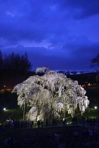 三春 滝桜の写真素材 [FYI04768301]