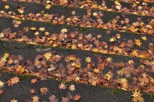 階段の落ち葉の写真素材 [FYI04768343]