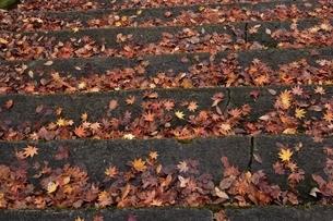 階段の落ち葉の写真素材 [FYI04768344]