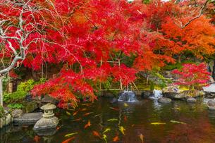 紅葉する長谷寺の庭園の写真素材 [FYI04768388]