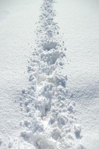 深い雪道を歩くの写真素材 [FYI04768460]