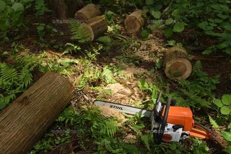 製材 林業の写真素材 [FYI04768609]