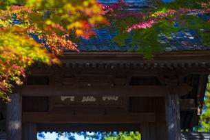 円覚寺の総門と紅葉の写真素材 [FYI04768681]