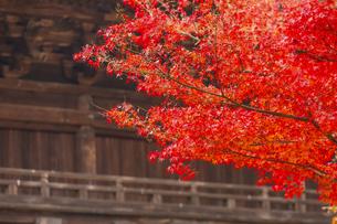 円覚寺の三門と紅葉の写真素材 [FYI04768691]