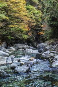 紅葉を見る阿寺渓谷の写真素材 [FYI04768714]