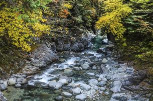 紅葉を見る阿寺渓谷の写真素材 [FYI04768720]