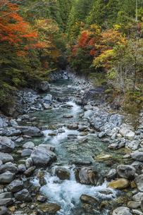 紅葉を見る阿寺渓谷の写真素材 [FYI04768722]