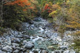 紅葉を見る阿寺渓谷の写真素材 [FYI04768723]