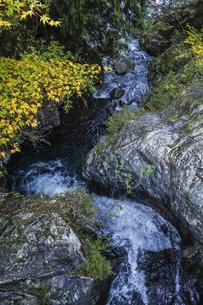 紅葉を見る阿寺渓谷水流路の写真素材 [FYI04768724]