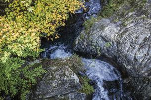 紅葉を見る阿寺渓谷水流路の写真素材 [FYI04768725]