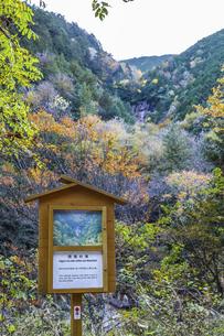 阿寺渓谷遠く滝を見る雨現の滝案内板の写真素材 [FYI04768734]