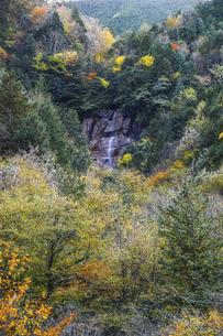 阿寺渓谷雨現の滝の写真素材 [FYI04768736]
