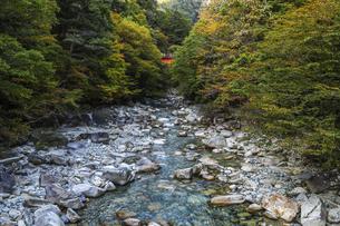 紅葉を見る柿其渓谷の写真素材 [FYI04768741]