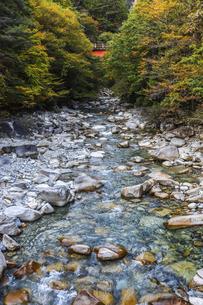 紅葉を見る柿其渓谷の写真素材 [FYI04768743]