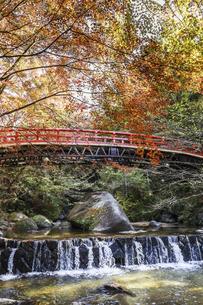 紅葉を見る岩屋堂紅橋風景の写真素材 [FYI04768750]