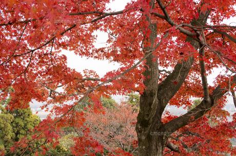 秋の行基寺の写真素材 [FYI04769111]