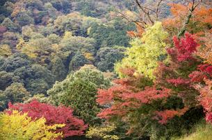 秋の行基寺の写真素材 [FYI04769112]