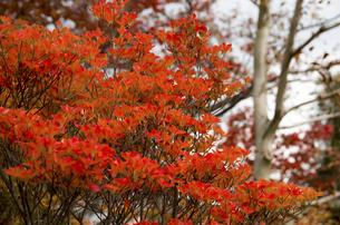秋の行基寺の写真素材 [FYI04769113]