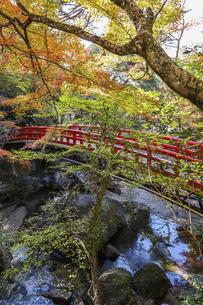 岩屋堂紅橋と紅葉の写真素材 [FYI04769144]