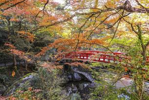 紅葉で覆われた岩屋堂紅橋の写真素材 [FYI04769146]
