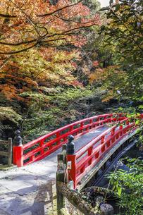 岩屋堂紅葉と紅橋の写真素材 [FYI04769147]