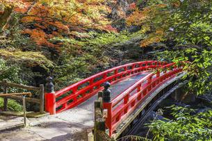 岩屋堂紅葉と紅橋の写真素材 [FYI04769148]