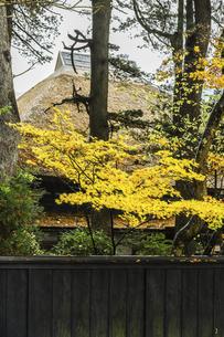 武家屋敷茅葺き屋根前に見る紅葉した樹木の写真素材 [FYI04769169]