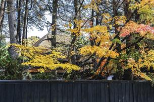 紅葉した樹木を見る武家屋敷の写真素材 [FYI04769171]