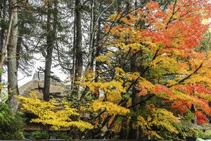 紅葉した樹木を見る武家屋敷の写真素材 [FYI04769172]