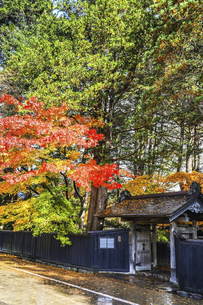 紅葉を見る武家屋敷石黒家の門風景の写真素材 [FYI04769174]