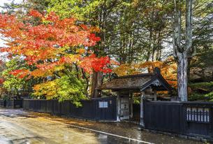 紅葉を見る武家屋敷石黒家の門風景の写真素材 [FYI04769175]