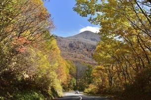 磐梯山 ゴールドラインの紅葉の写真素材 [FYI04769251]