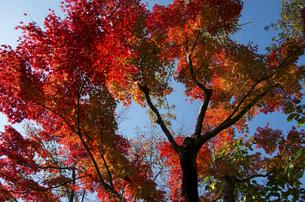 グリーンピア春日井の紅葉の写真素材 [FYI04769334]