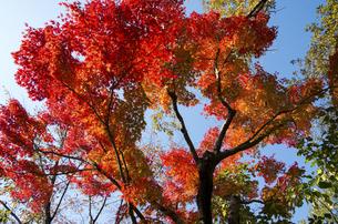 グリーンピア春日井の紅葉の写真素材 [FYI04769335]